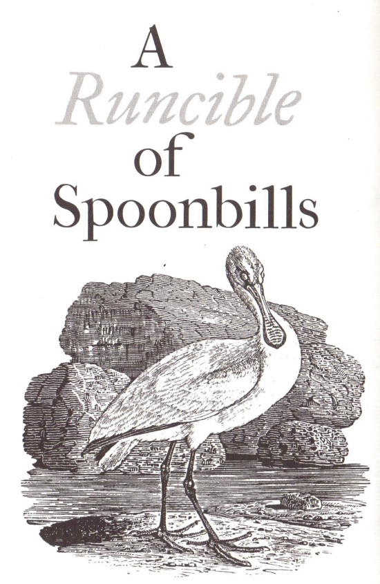 a runcible of spoonbills